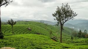 a0b01-teagarden1